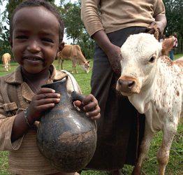 Pojken Sisay med den ko som hans familj fått av Plan
